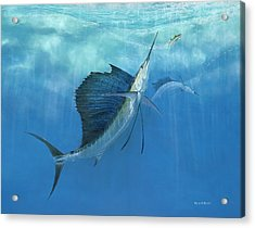 Two Of A Kind Sailfish Acrylic Print by Kevin Brant