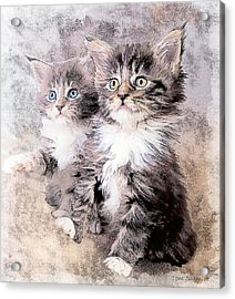 Two Of A Kind Acrylic Print by Tom Schmidt