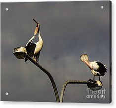 Acrylic Print featuring the photograph Two On A Pole by Blair Stuart