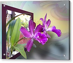 Two Orchids Acrylic Print by Ginny Schmidt