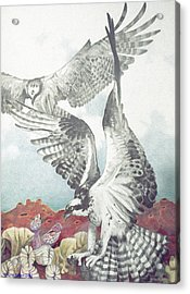 Two Ospreys Acrylic Print