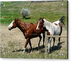 Two Pals Acrylic Print by Bobbylee Farrier