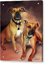 Two Pit Bull Terriers Acrylic Print