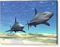 Two Sharks On Patrol Over A Sandy Reef Acrylic Print by Corey Ford