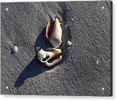 Two Shells On The Beach Acrylic Print