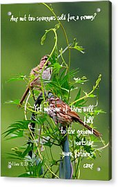 Two Sparrows For A Penny Acrylic Print
