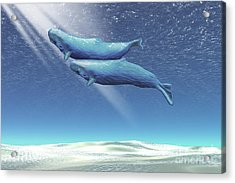 Two Sperm Whales Near The Surface Acrylic Print by Corey Ford