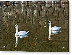 Two Swan Floating On A Pond  Acrylic Print by U Schade
