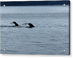 Two Tails Of Whales Acrylic Print