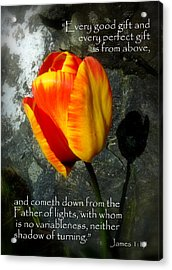 Two Tulips Shadow Scripture Acrylic Print by Cindy Wright