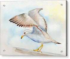 Acrylic Print featuring the painting Tybee Seagull by Doris Blessington
