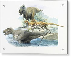 Tyrannosaurs And Albertosaurus Acrylic Print