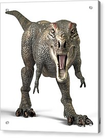 Tyrannosaurus Rex  Acrylic Print by Roger Hall and Photo Researchers