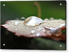 Acrylic Print featuring the photograph UFO by Scott Holmes