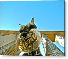Under Dog Acrylic Print by Arthur Hofer