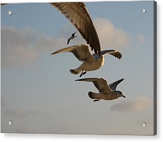 Acrylic Print featuring the photograph Under His Wings by Jan Cipolla