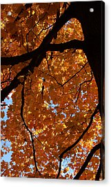 Under The Canopy Acrylic Print by Lyle Hatch