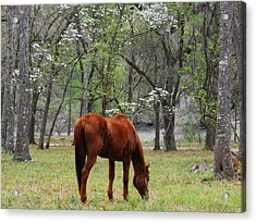 Under The Dogwoods Acrylic Print by Margaret Palmer