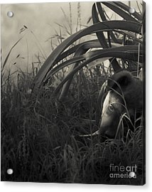 Under The Lily Leaves Acrylic Print