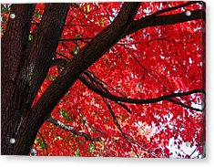Under The Reds Acrylic Print by Rachel Cohen