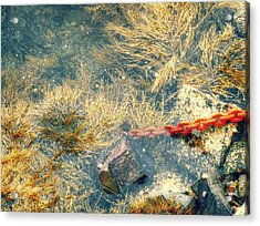 Acrylic Print featuring the photograph Under The Sea by Kelly Reber