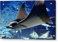 Underwater Flight Acrylic Print by DigiArt Diaries by Vicky B Fuller