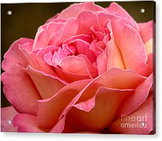 Unfolding Acrylic Print by Rory Sagner