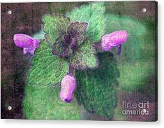 Unkraut Acrylic Print by Angela Bruno