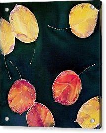 Untitled Acrylic Print by Carolyn Doe