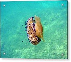 Unwelcome Jellyfish Acrylic Print by Rod Johnson