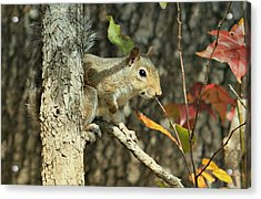 Up A Tree Acrylic Print by Debbie Sikes