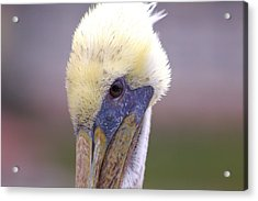 Up Close And Personal Acrylic Print