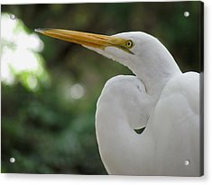 Up Close And Personal Acrylic Print by Judy Wanamaker