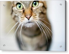 Up Close Brown Striped Cat Acrylic Print