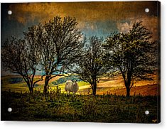 Acrylic Print featuring the photograph Up On The Sussex Downs In Autumn by Chris Lord