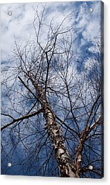 Up Up And Away Acrylic Print by Sandi Blood