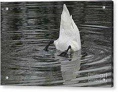 Upside Down Acrylic Print by Charles Lupica