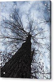 Upward Acrylic Print by Michele Bishop