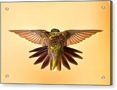 Acrylic Print featuring the photograph Usaf Hummingbirds Wings by Randall Branham