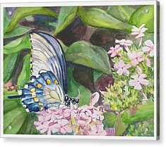 Vacition Butterfly Acrylic Print by Judy Loper