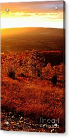 Valley Of Gold Acrylic Print by Steven Lebron Langston