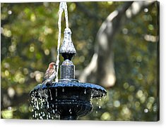 Van Vorst Fountain Acrylic Print by JAMART Photography