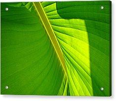 Veins Of Green Acrylic Print by Nick Kloepping