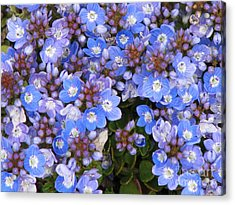 Acrylic Print featuring the photograph Veronica by Michele Penner
