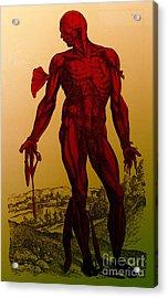Vesalius De Humani Corporis Fabrica Acrylic Print