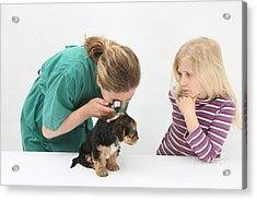 Vet Using An Otoscope To Examine A Pups Acrylic Print by Mark Taylor