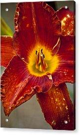 Vibrant Lily Acrylic Print
