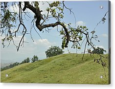View From Under The Oak Acrylic Print