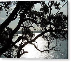 View Of Auckland Acrylic Print by Peter Mooyman