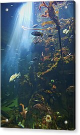 View Of Fish In An Aquarium In The San Acrylic Print by Laura Ciapponi